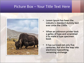 Brahman at sunrise PowerPoint Templates - Slide 13