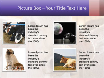 Brahman at sunrise PowerPoint Templates - Slide 14