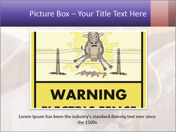 Brahman at sunrise PowerPoint Templates - Slide 15