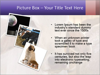 Brahman at sunrise PowerPoint Templates - Slide 17