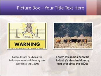 Brahman at sunrise PowerPoint Templates - Slide 18