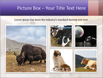 Brahman at sunrise PowerPoint Templates - Slide 19