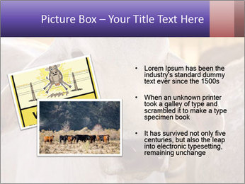Brahman at sunrise PowerPoint Template - Slide 20