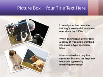 Brahman at sunrise PowerPoint Templates - Slide 23
