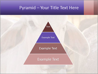 Brahman at sunrise PowerPoint Templates - Slide 30