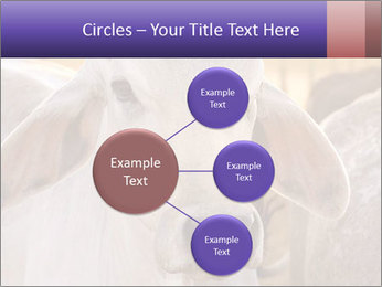 Brahman at sunrise PowerPoint Templates - Slide 79