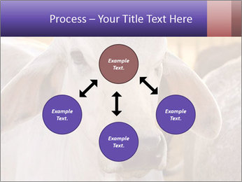 Brahman at sunrise PowerPoint Templates - Slide 91