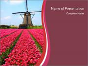 Rows of pink tulips PowerPoint Template