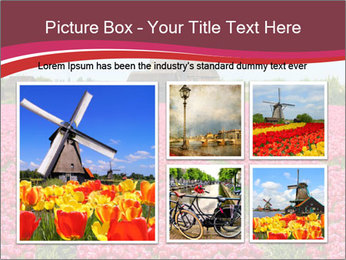 Rows of pink tulips PowerPoint Templates - Slide 19