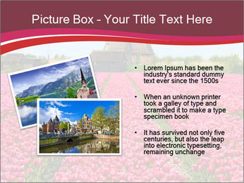Rows of pink tulips PowerPoint Templates - Slide 20