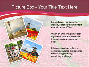 Rows of pink tulips PowerPoint Templates - Slide 23