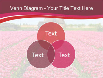 Rows of pink tulips PowerPoint Templates - Slide 33