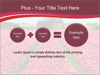Rows of pink tulips PowerPoint Templates - Slide 75