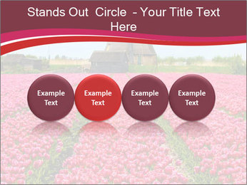 Rows of pink tulips PowerPoint Templates - Slide 76