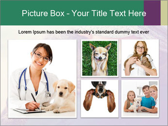 A girl holding a pit bull PowerPoint Template - Slide 19