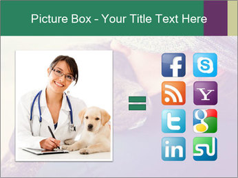 A girl holding a pit bull PowerPoint Template - Slide 21