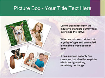 A girl holding a pit bull PowerPoint Template - Slide 23