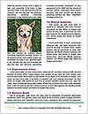 0000090725 Word Templates - Page 4