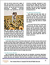 0000090728 Word Templates - Page 4