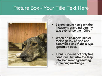 Adorable black lab PowerPoint Templates - Slide 13