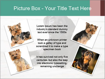 Adorable black lab PowerPoint Templates - Slide 24