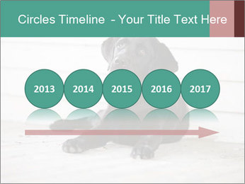 Adorable black lab PowerPoint Templates - Slide 29