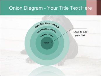 Adorable black lab PowerPoint Templates - Slide 61