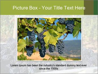 Pinot Noir grapes PowerPoint Templates - Slide 15