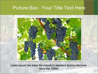 Pinot Noir grapes PowerPoint Templates - Slide 16