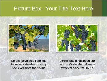 Pinot Noir grapes PowerPoint Templates - Slide 18