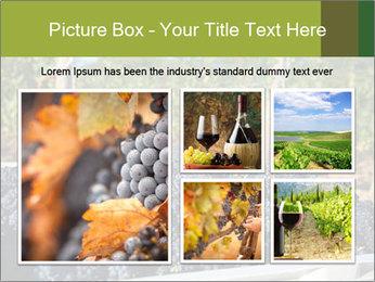 Pinot Noir grapes PowerPoint Templates - Slide 19