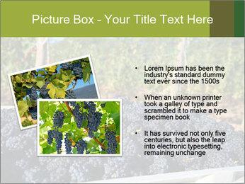 Pinot Noir grapes PowerPoint Templates - Slide 20