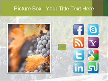 Pinot Noir grapes PowerPoint Templates - Slide 21