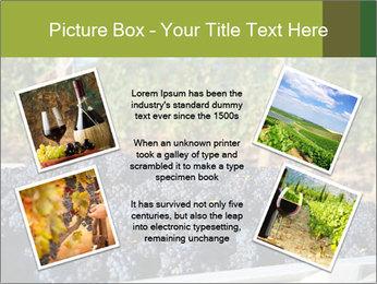 Pinot Noir grapes PowerPoint Templates - Slide 24