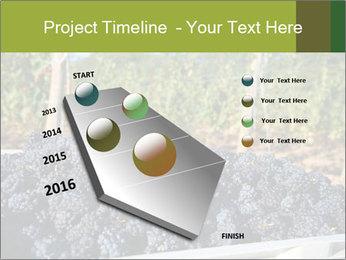 Pinot Noir grapes PowerPoint Templates - Slide 26