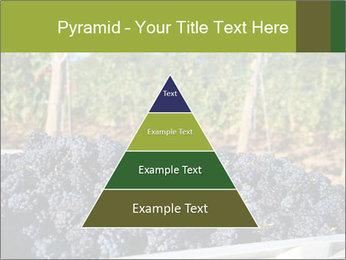 Pinot Noir grapes PowerPoint Templates - Slide 30