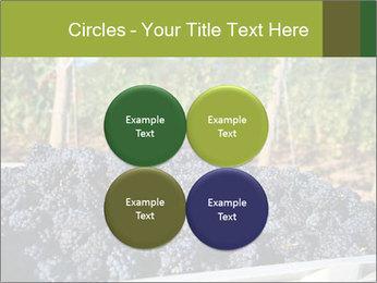 Pinot Noir grapes PowerPoint Templates - Slide 38