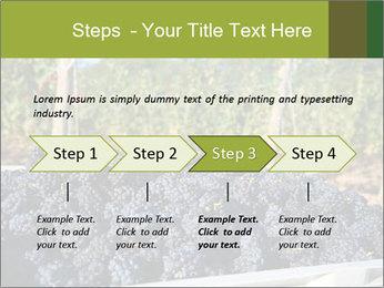 Pinot Noir grapes PowerPoint Templates - Slide 4