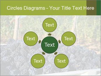Pinot Noir grapes PowerPoint Templates - Slide 78