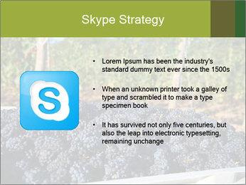 Pinot Noir grapes PowerPoint Templates - Slide 8