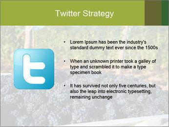 Pinot Noir grapes PowerPoint Templates - Slide 9