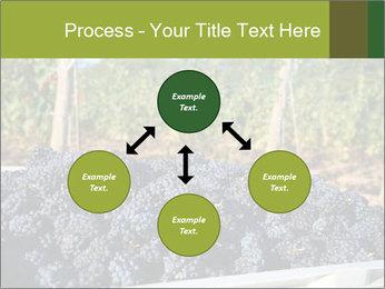 Pinot Noir grapes PowerPoint Templates - Slide 91