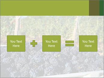 Pinot Noir grapes PowerPoint Templates - Slide 95