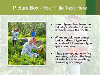 Man picking tomatoes PowerPoint Template - Slide 13