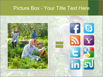 Man picking tomatoes PowerPoint Template - Slide 21