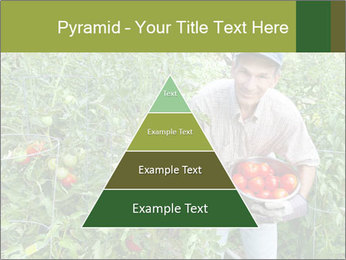 Man picking tomatoes PowerPoint Template - Slide 30