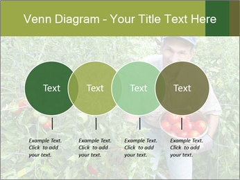 Man picking tomatoes PowerPoint Template - Slide 32