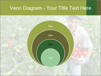 Man picking tomatoes PowerPoint Template - Slide 34