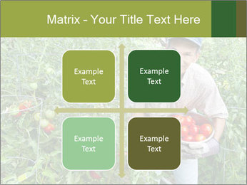 Man picking tomatoes PowerPoint Template - Slide 37