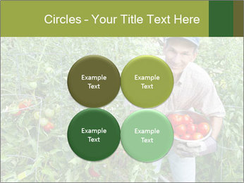 Man picking tomatoes PowerPoint Template - Slide 38